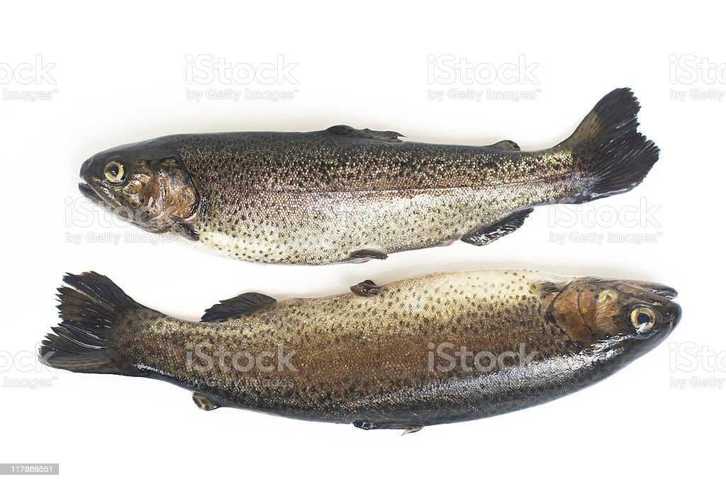 Pisces royalty-free stock photo