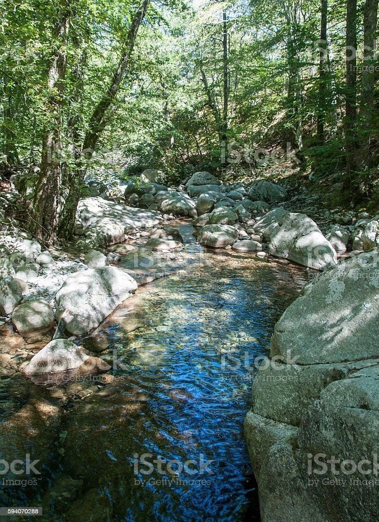 piscine naturelle stock photo