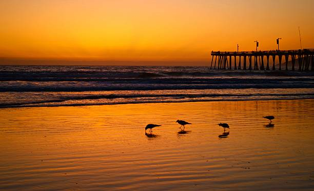 pismo beach sunset - central coast california stock photos and pictures