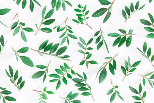 Pistacho hojas sobre fondo blanco. Vista plana endecha, superior - foto de stock
