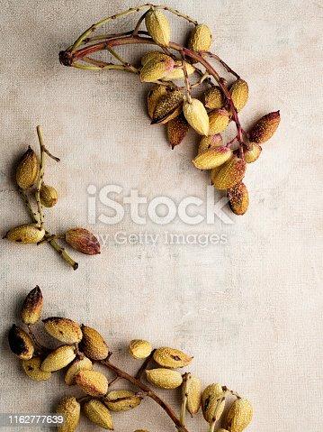 Anatolia, Asia, East Asia, Accessibility, Antioxidant,Pistachio, Snack, Nut - Food, Fruit, Roasted,Ripe,  Cracked,Salted
