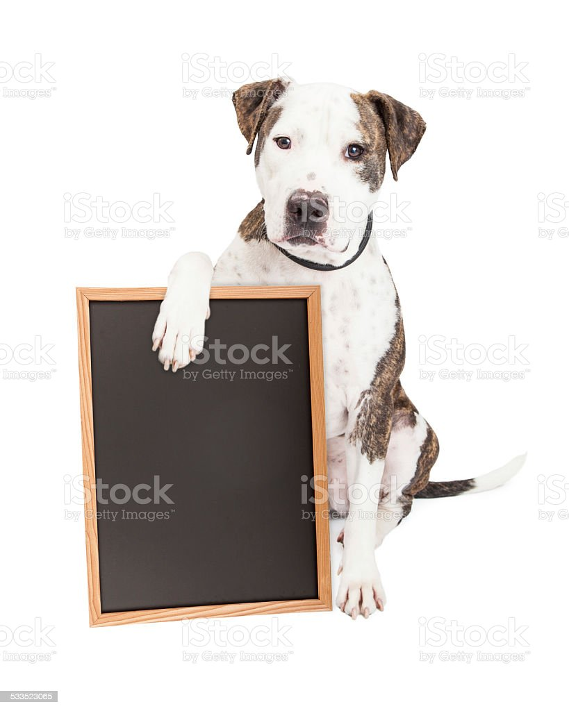 Pit Bull Dog Holding Chalk Board stock photo