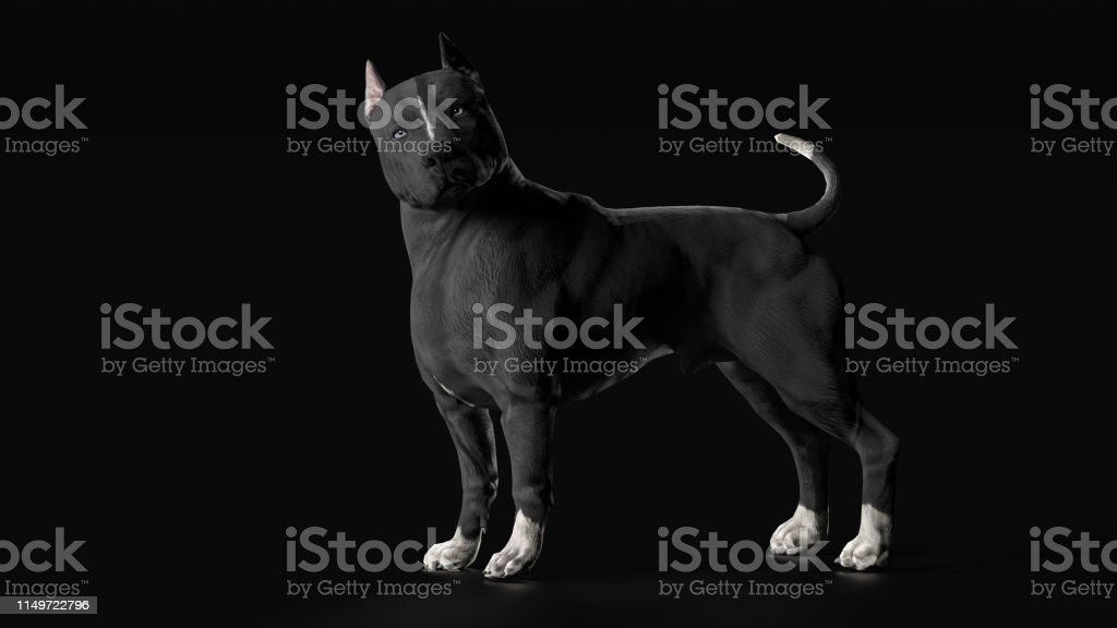 Pitbull Dog Directly Looking At Kamera Side View 3d Render
