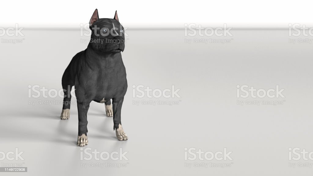 Pitbull Dog Standing Wide Angle View 3d Render Stock Photo
