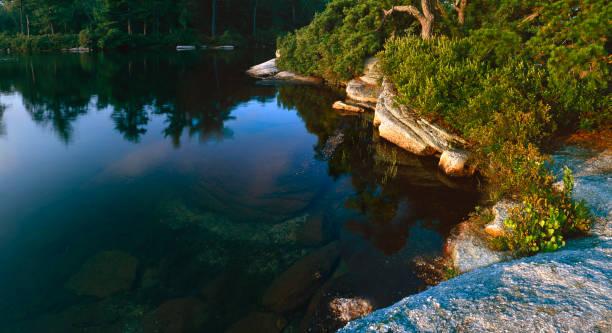 Pitch Pine at Lake Awosting stock photo