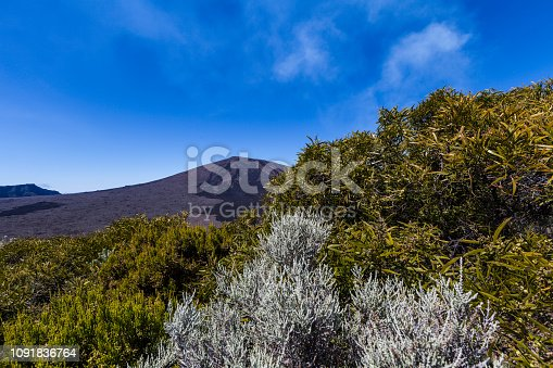 volcanic flora at piton de la fournaise volcano on reunion island, mascarene islands, french overseas territory.