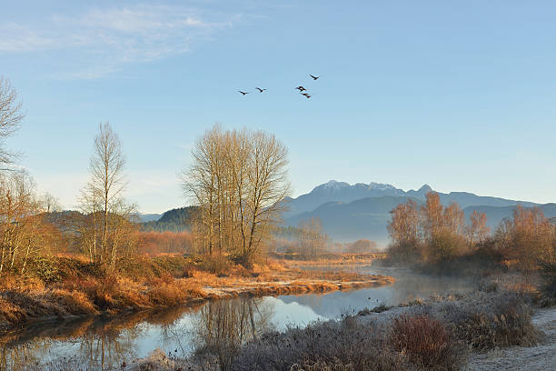 Pitt River and Golden Ears Mountain at sunrise stock photo