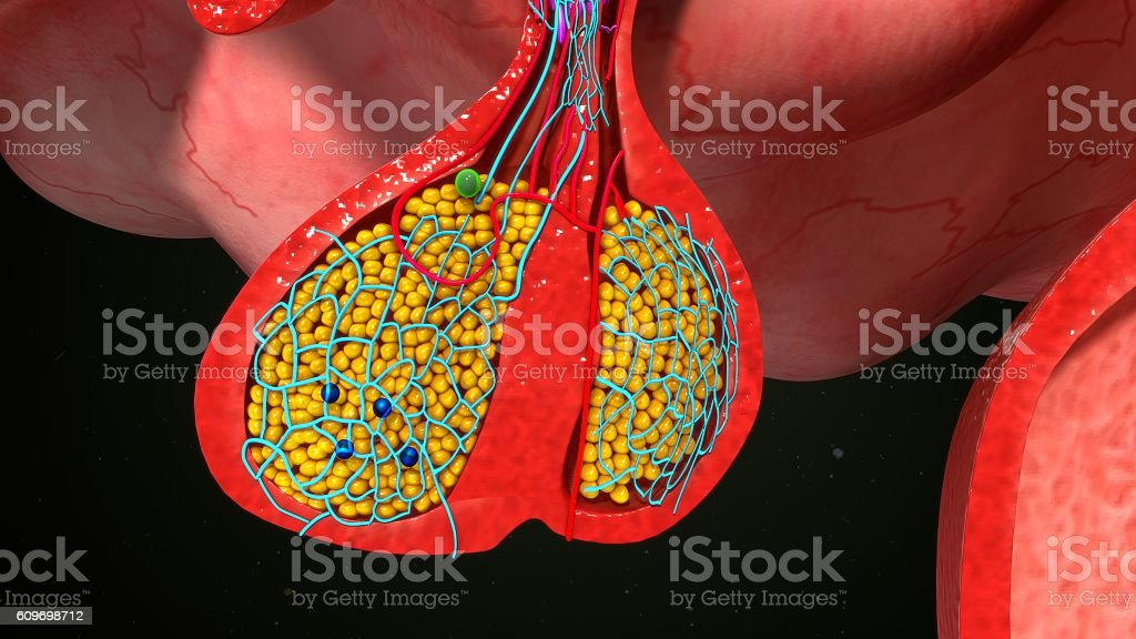 Pituitary gland Endocrine cells stock photo