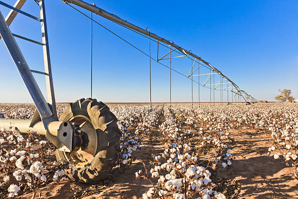 pivot circle irrigation equipment in cotton field stock photo
