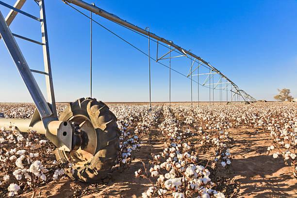 pivot circle irrigation equipment in cotton field - cotton growing bildbanksfoton och bilder
