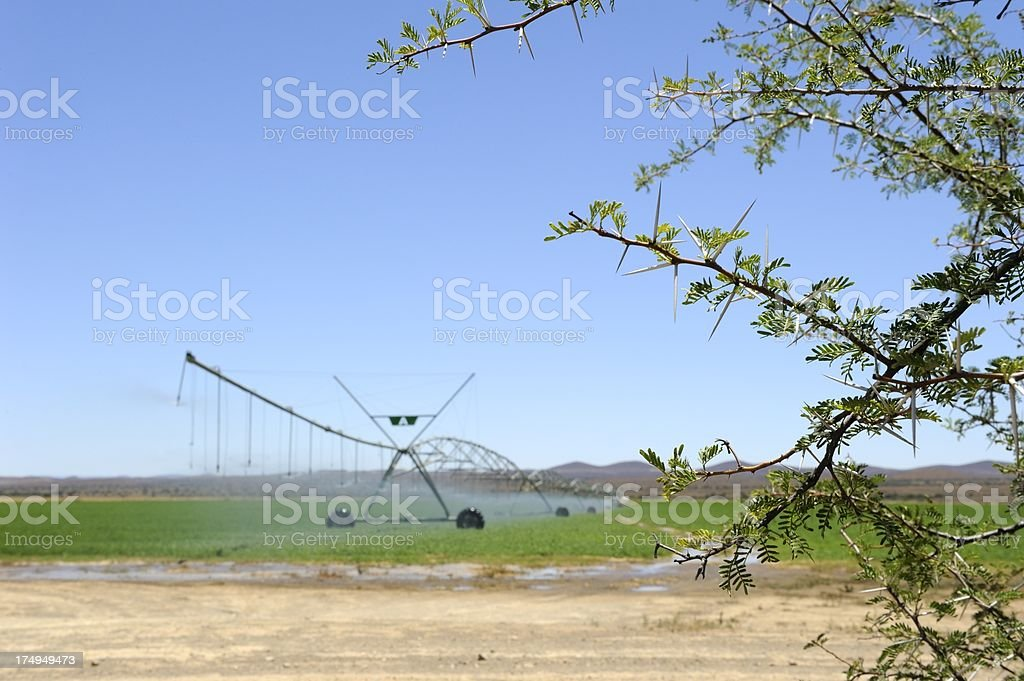 Pivot irrigation in dry South African Karoo with thorns foreground royalty-free stock photo