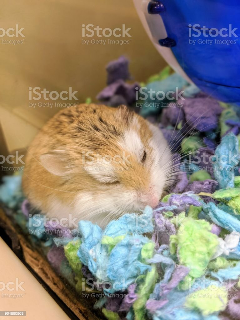 A place to sleep royalty-free stock photo