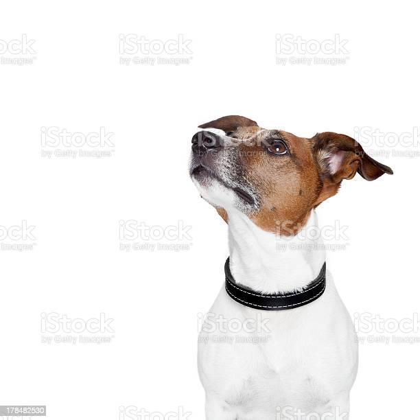 Placeholder banner dog picture id178482530?b=1&k=6&m=178482530&s=612x612&h=oveeljdqwm  utlsj1ak avfgapgyugazpdrxyakm2o=