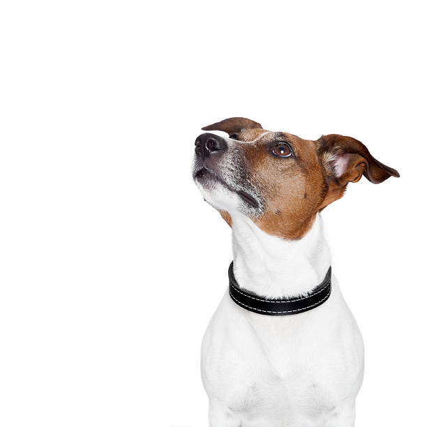 placeholder banner dog stock photo