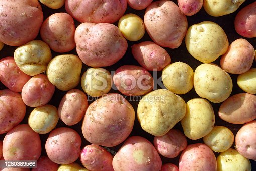 Placer of pure and large potatoes of white and red varieties. A farmer's natural vegetable. Top view