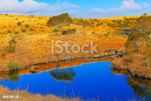 Placid lake reflection and Araucarias at sunrise, Southern Brazil countryside landscape, border with Argentina and Uruguay