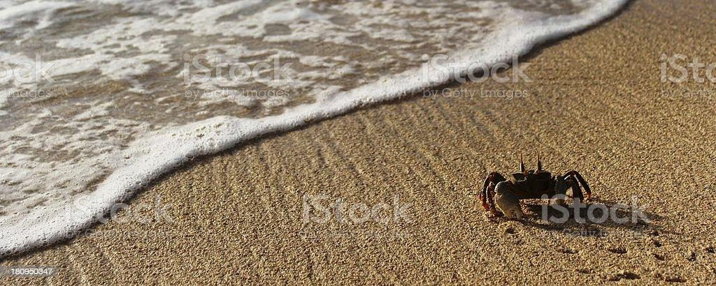 plage, beach, sand royalty-free stock photo