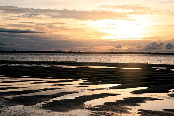 'plage des hattes' beach at yalimapo, french guiana. - leatherback stockfoto's en -beelden