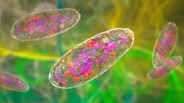 Plague bacterium Yersinia pestis stock photo