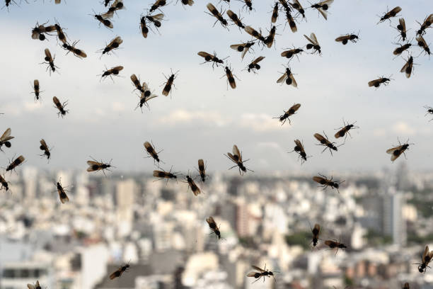 Plague of ants Plague of ants through a glass ant stock pictures, royalty-free photos & images