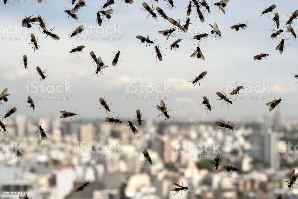 Plague of ants stock photo