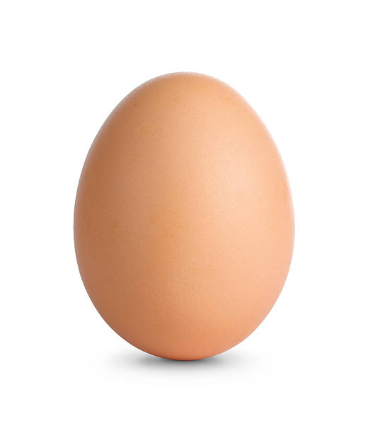 Plain brown egg standing on white surface stock photo