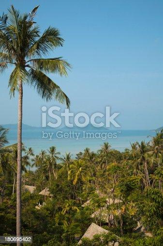 Plam Forest on Koh Samui Island