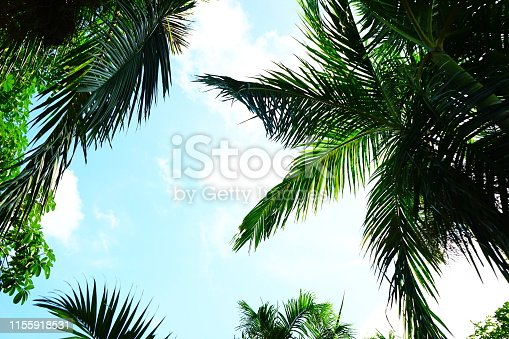 Plam leaf with blue sky background