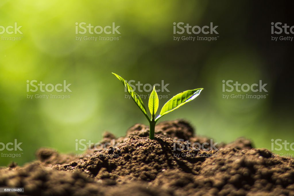 plan tree in neutral background – Foto