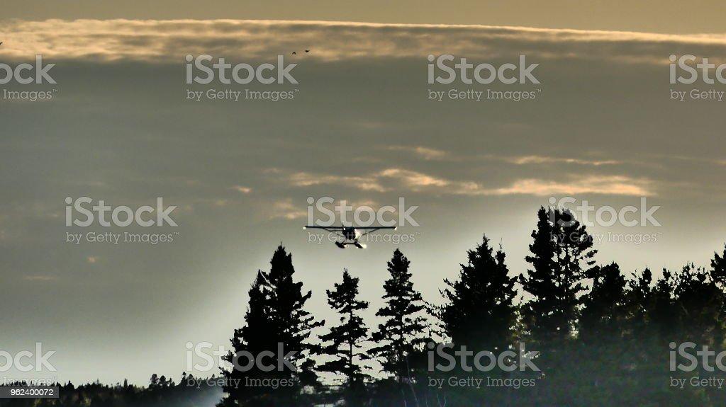 Avion au dessus des sapins à la lueur du soleil couchant stock photo