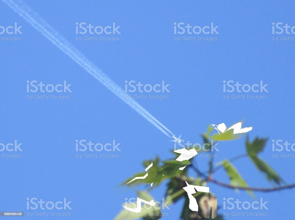 Plane  and flower royalty-free stock photo