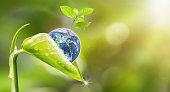 美しい鮮度成長の木と一滴の夏の屋外の森背景のボケ味の新しい成長植物による孔水の惑星地球。NASA から提供された地球の画像。