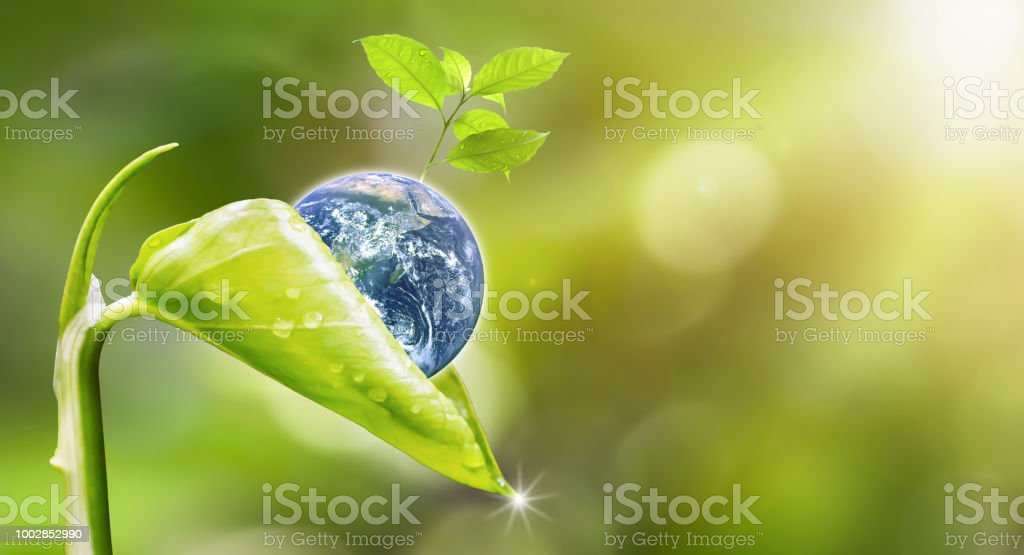 Planet earth with beautiful freshness growth tree and drop of water holed by new growth plant on outdoor summer forest bokeh background.Earth image furnished by NASA. stock photo