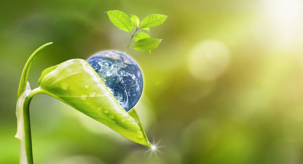 planet earth with beautiful freshness growth tree and drop of water holed by new growth plant on outdoor summer forest bokeh background.earth image furnished by nasa. - earth day stock pictures, royalty-free photos & images