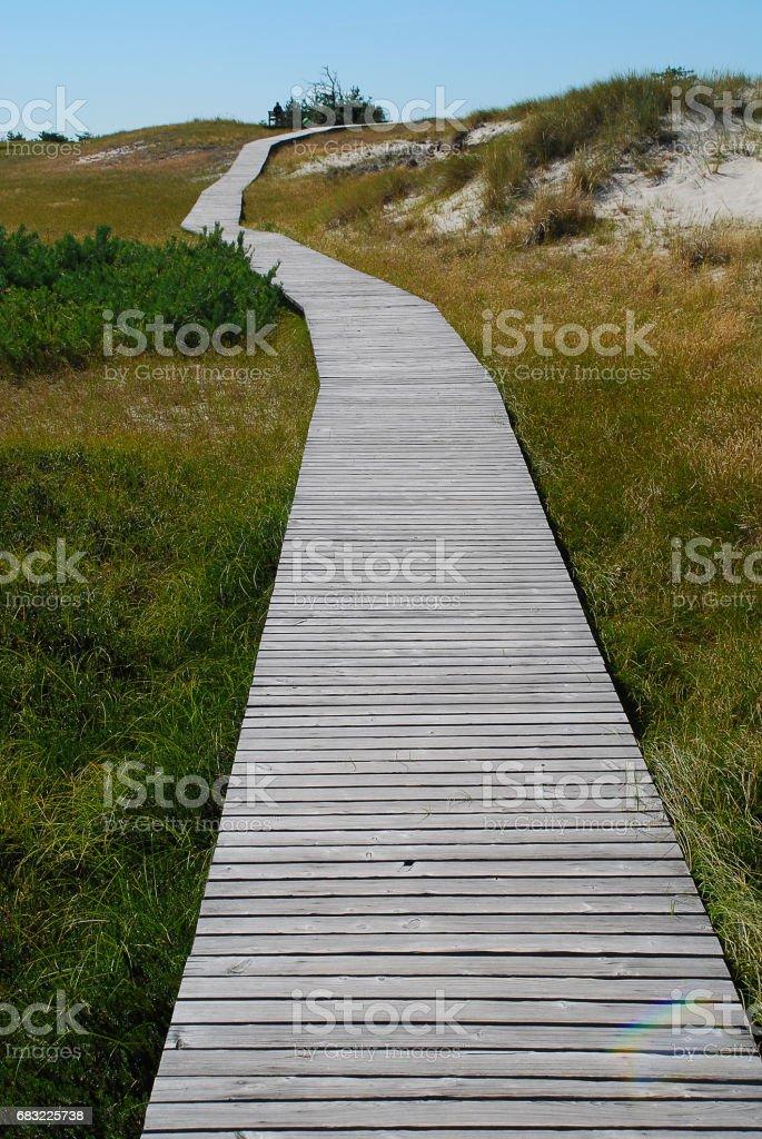Plank road through the dunes, coast of Ruegen, Germany foto de stock royalty-free