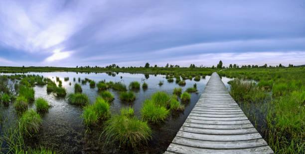 planks leading through a swamp over a pond in sunset - hohes venn stock-fotos und bilder