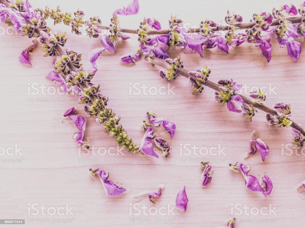 plano de fundo flores lils foto royalty free