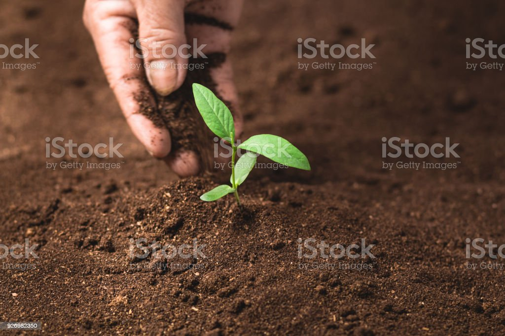 Pflanzen Sie einen Baum Pflanze wächst die Boden- und Sämlinge in den Routinier – Foto