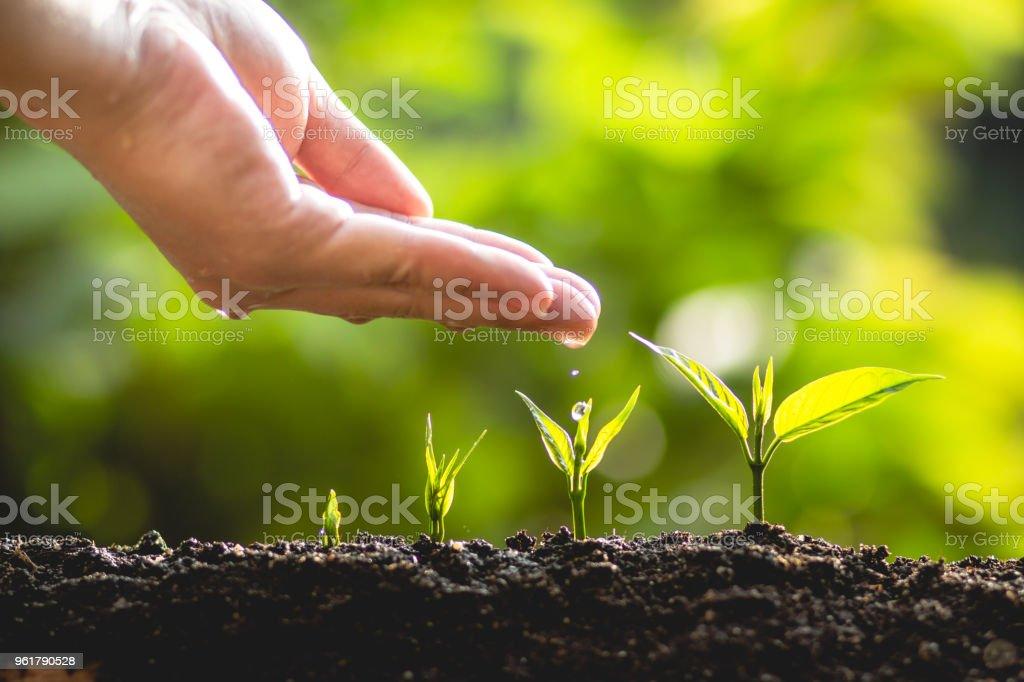 Pflanzen Sie einen Baum wachsende Baum Pflege und Bewässerung der Bäume In der Natur – Foto