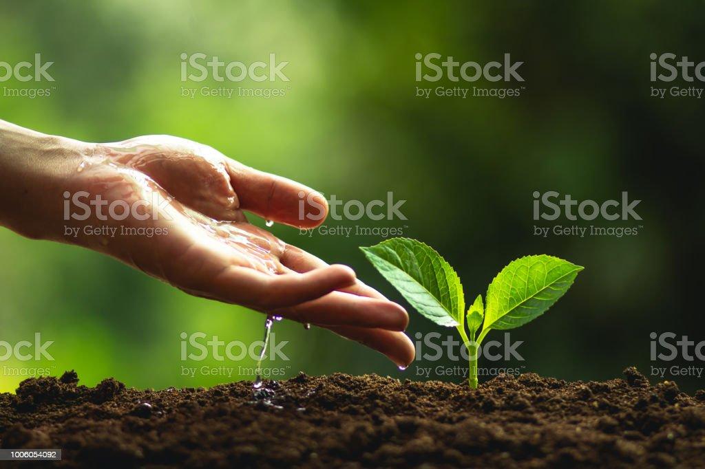 Pflanzen Sie grün Zeitmessung Baumsetzlingen natürlichen Baum in der Natur – Foto