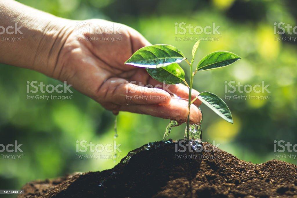 Pflanzen Sie einen Baum Passionsfrucht/Maracuja – Foto