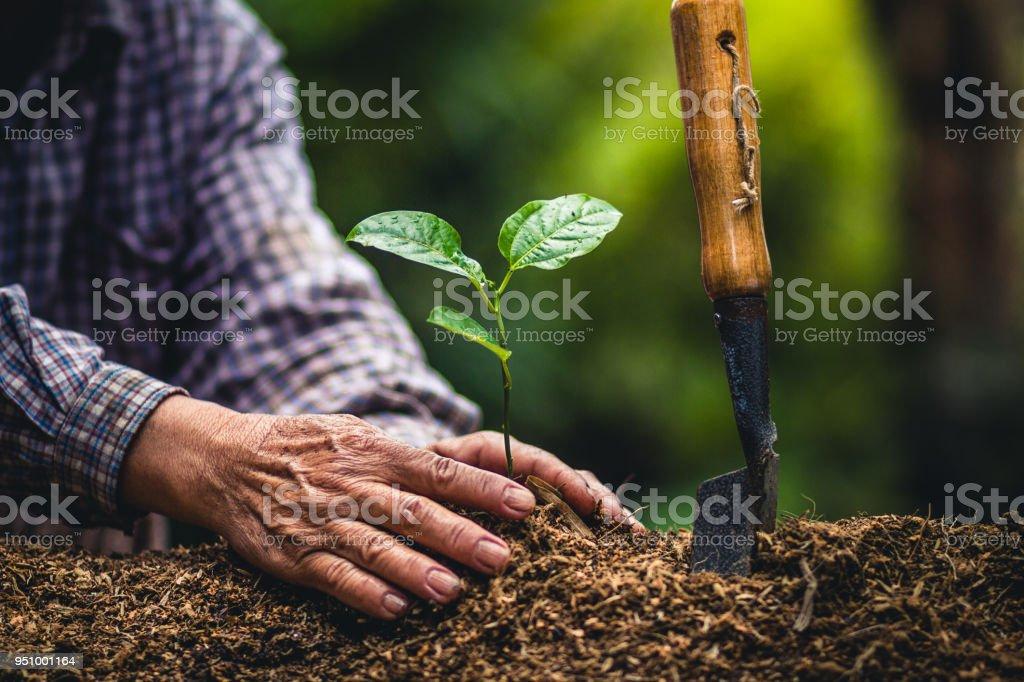 Pflanzen einen Baum Passionsfrucht starke Setzlinge, Pflanzung junger Baum von Alter Hand am Boden als Pflege und sparen würde Konzept – Foto