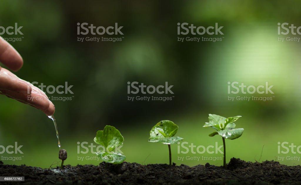 Pflanzen Sie einen Baum, schützen den Baum, Hand helfen den Baum, wächst Schritt, Bewässerung, ein Baum, Baum Pflege, Natur Hintergrund – Foto