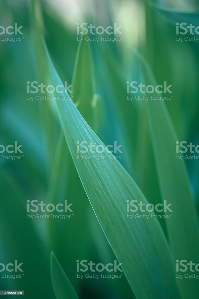 Plant abstract background stock photo