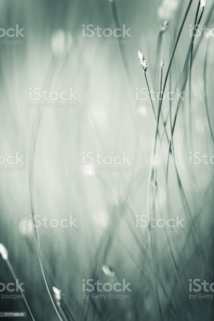 plant abstract royalty-free stock photo