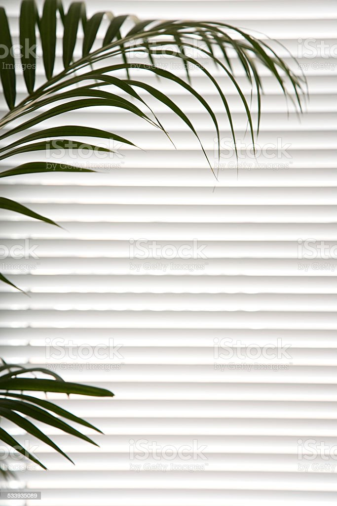 Plant against blinds stock photo