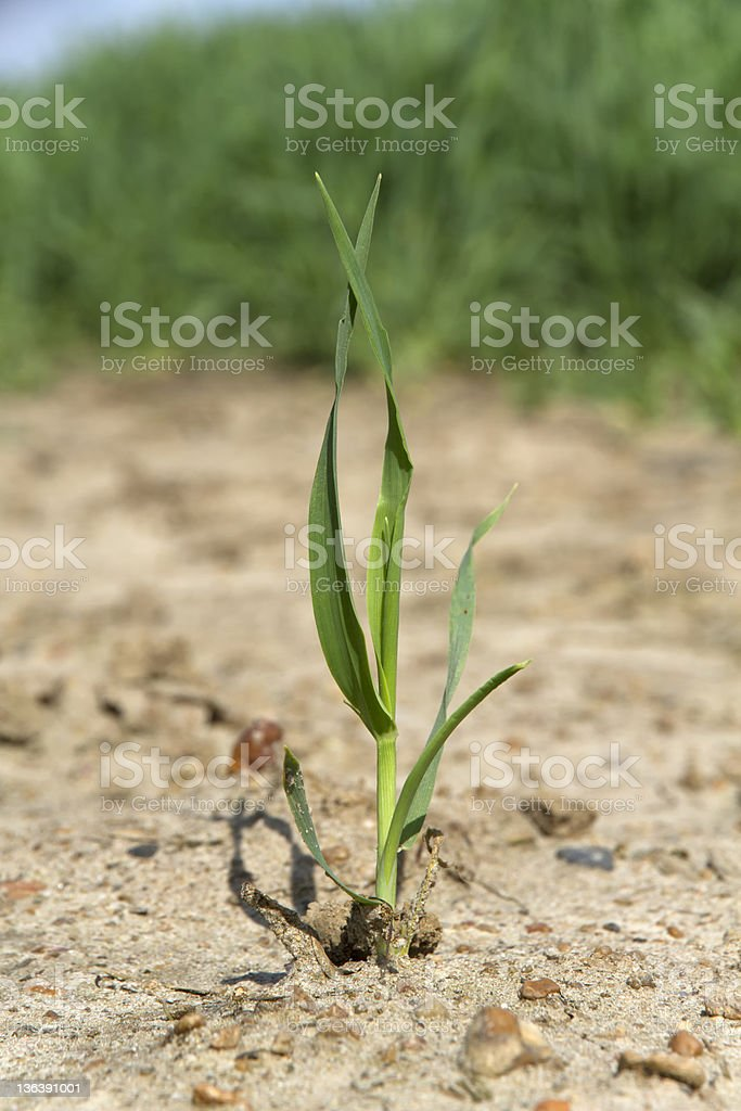 Plant Alone royalty-free stock photo