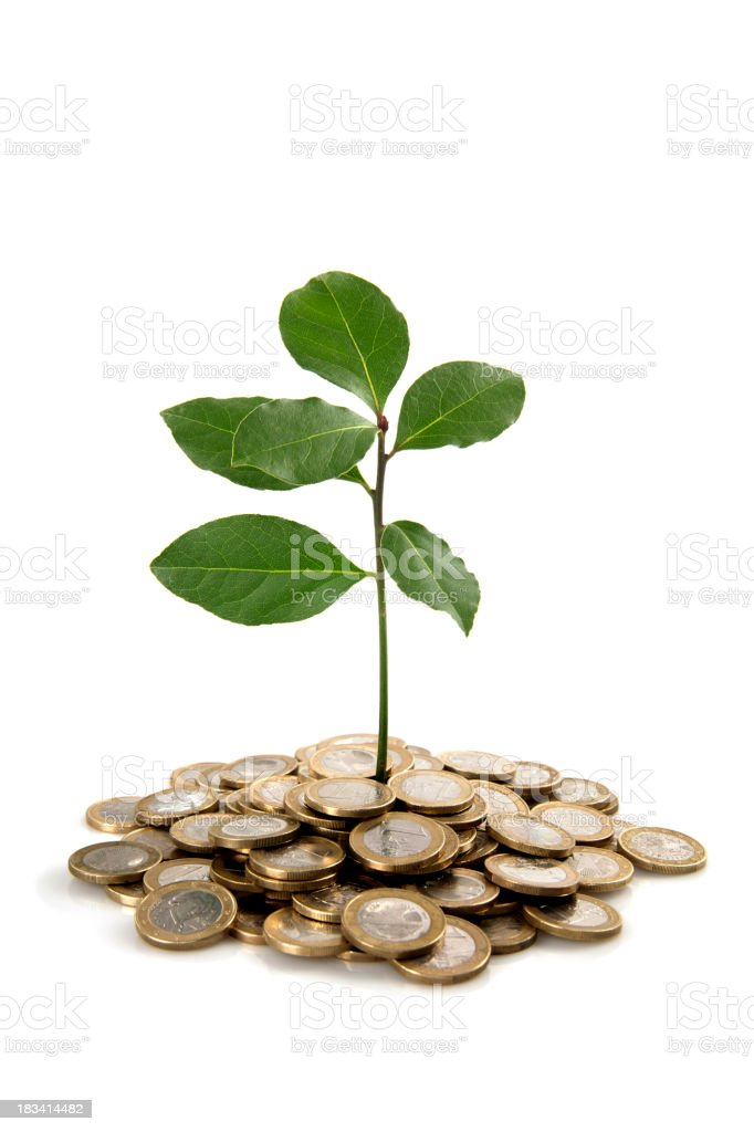 Plant and coins royalty-free stock photo