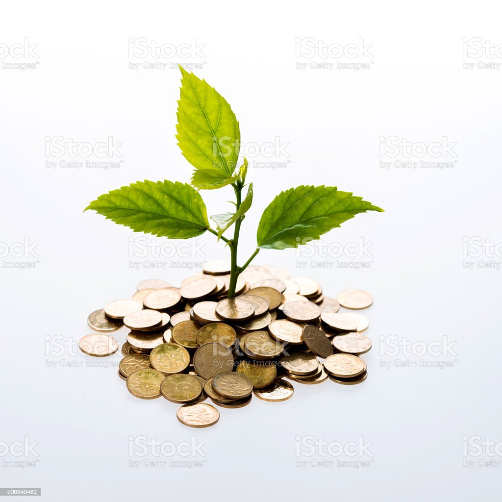 Plant and coins stock photo