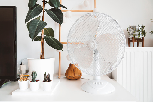 Living room decor, plants and a fan for hot summer days. Modern decor in a living room.